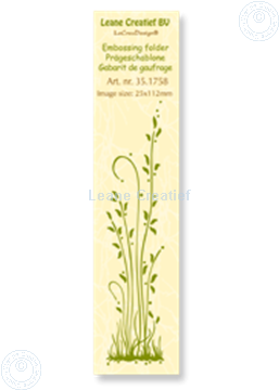 Picture of Border grass long