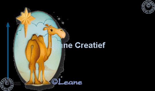 Bild von Camel